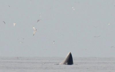 whale-watching-haad-chao-samran-400x250